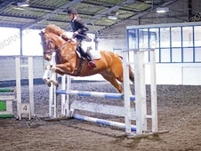 All Rounder horse - 5 yrs 1 mth 15.2 hh Skewbald - South Yorkshire