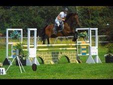 All Rounder horse - 14 yrs 16.0 hh Bay - Bedfordshire