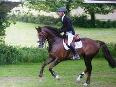 Show Jumpers horse - 9 yrs 15.3 hh Liver Chestnut - Oxfordshire