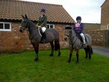 All Rounder horse - 10 yrs 3 mths 12.2 hh Bay - Humberside