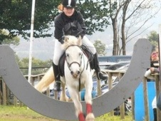 All Rounder horse - 5 yrs 11 mths 13.2 hh Grey - Mid Glamorgan