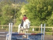 14hh Confidence Giving Pony!