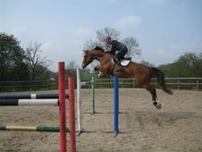 Show Jumpers horse - 12 yrs 16.3 hh Bay - Oxfordshire
