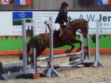 All Rounder horse - 11 yrs 9 mths 13.2 hh Liver Chestnut - Dumfri...