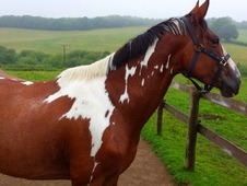 Stunning Coloured Mare