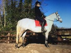 All Rounder horse - 6 yrs 14. 2 hh - Laois