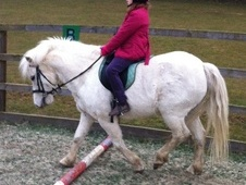 Lead Rein & First Ridden horse - 12 yrs 12.0 hh Grey - Somerset