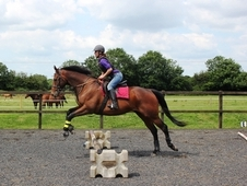 Retrained Ex-racehorses Looking For A New Home