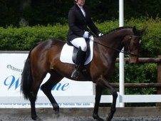 Schoolmistress/dressage Tb Mare For Full Loan/sale