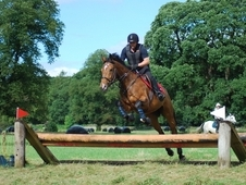 Eventing Prospect Horse