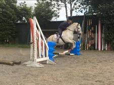 *** ALL ROUND FUN PONY ***