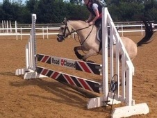 Safe and genuine 13hh pony