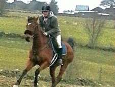 Other horse - 9 yrs 16.3 hh Bright Bay - West Yorkshire