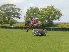 16. 1 Hh Dark Bay - North Yorkshire