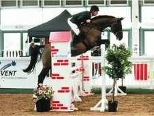 Show Jumpers horse - 9 yrs 16.0 hh Black - Staffordshire