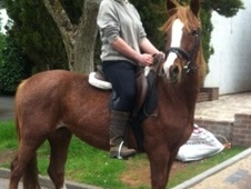 All Rounder horse - 3 yrs 15.0 hh Strawberry Roan - West Midlands