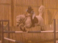 Show Jumpers horse - 12 yrs 14.2 hh Grey - Kent
