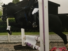 Talented 12hh dressage / jumping pony