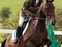 All Rounder horse - 15 yrs 14.2 hh Bay - Stirlingshire