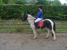 All Rounder horse - 6 yrs 14.2 hh Coloured - West Midlands