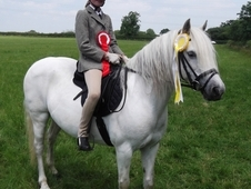 13hh Pretty Welsh Pony