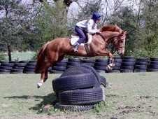 All Rounder horse - 5 yrs 15.0 hh Chestnut - Cheshire