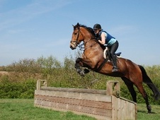 Beautiful Mare for loan in Buckinghamsire - Buckinghamshire