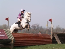All Rounder horse - 17 yrs 14.1 hh Grey - East Sussex