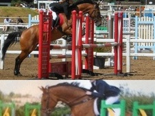 All Rounder horse - 10 yrs 3 mths 16.2 hh Bay - Kent