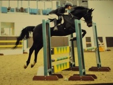 Beautiful, Outstanding Allround Mare