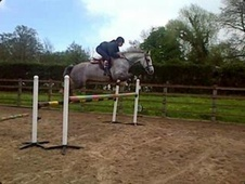 All Rounder horse - 5 yrs 15.3 hh Grey - Cheshire
