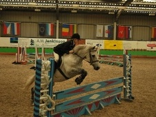 All Rounder horse - 12 yrs 14.2 hh Grey - Cumbria
