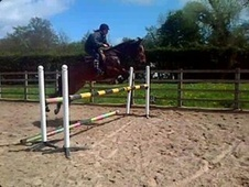 All Rounder horse - 10 yrs 14.1 hh Bay - Cheshire