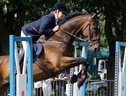 All Rounder horse - 15 yrs 6 mths 16.1 hh Bay - North Humberside