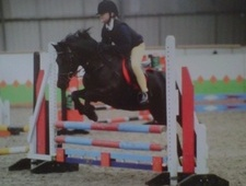 Pony Club Ponies horse - 11 yrs 13.2 hh Black - Cumbria