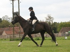 All Rounder horse - 4 yrs 15.1 hh Black - Lincolnshire