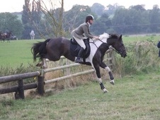 Talented Coloured Gelding