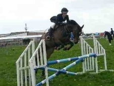 All Rounder horse - 12 yrs 14.2 hh Bay - West Yorkshire