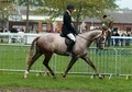 Ex Racehorses horse - 4 yrs 3 mths 16.0 hh Rose Grey - Nottinghamshire