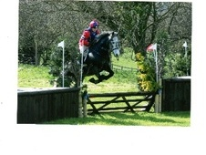 All Rounder horse - 5 yrs 1 mth 15.0 hh Steel Grey - Derbyshire