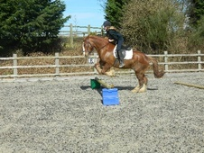 All Rounder horse - 8 yrs 8 mths 14.3 hh Chestnut - East Sussex