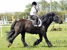 All Rounder horse - 8 yrs 13.1 hh Black - West Midlands