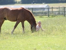 Pony Club Ponies horse - 11 yrs 13.0 hh Chestnut - Berkshire
