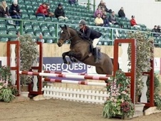All Rounder horse - 6 yrs 152.0 hh Bay - Essex
