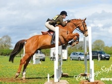 All Rounder horse - 12 yrs 11 mths 16.0 hh Chestnut - Cheshire