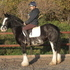 Beautiful and Kind 14:3hh Black Blagdon Mare