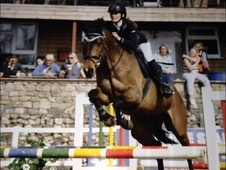 Top showjumper/potential eventer