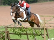 Coloured horse - 5 yrs 4 mths 15.2 hh Coloured - West Midlands