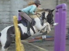 Easy 13hh all round coloured hunting pony