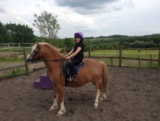 Welsh A Lead Rein / Show Pony